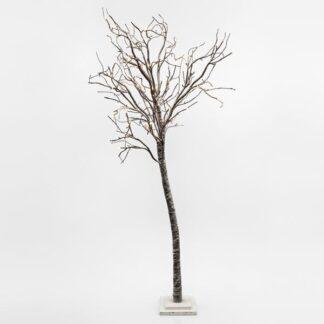 Δέντρα με Φως